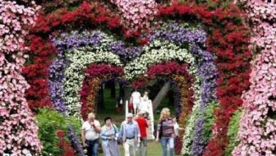 تصویر از عکس های دیدنی و جالب جشنواره گل تا . . .