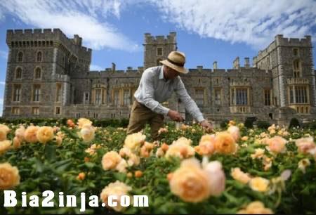 تصویر از عکس های دیدنی و جالب از قلعه وینسور تا . . .
