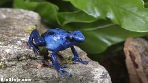چرا رنگ آبی در طبیعت بسیار نادر است ؟