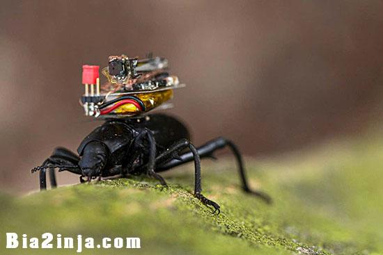 تصویر از دوربینی که دنیا را از دید سوسکها نشان میدهد!