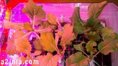 تصویر از ناسا اقدام به پرورش گیاهان در فضا می کند
